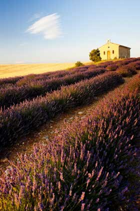 Chapel and lavender fields in Provence, France.